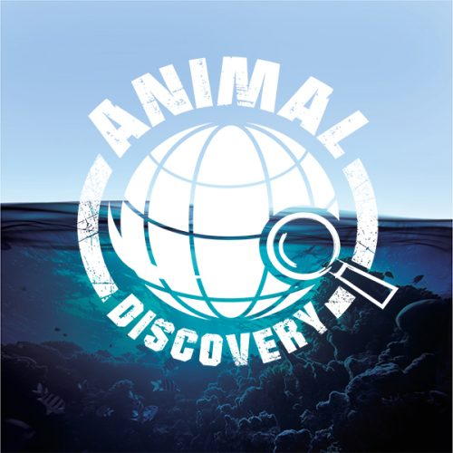 Animal Discovery